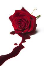 Roos met bloed